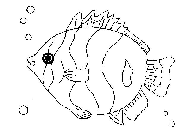 Printable Colouring Fish Seahorse Coloring Page Pages